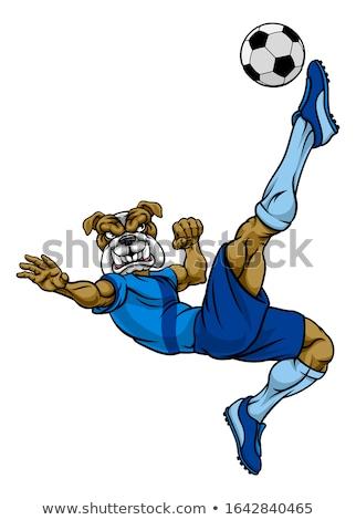 Bulldog voetbal voetbal mascotte boos dier Stockfoto © Krisdog