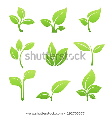 Stock fotó: Stilizált · zöld · levél · vektor · ikon · illusztráció · tavasz