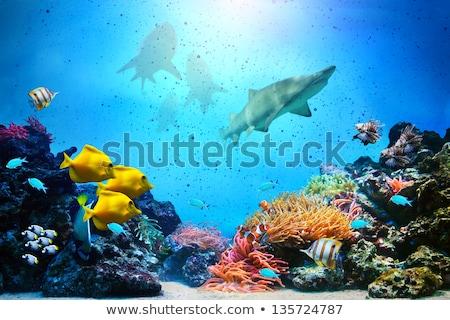 Vízalatti jelenet korallzátony illusztráció természet tenger Stock fotó © colematt