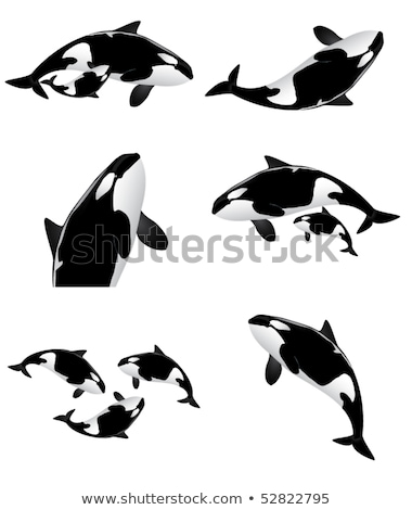 Orca icon, whale killer, isolated on white background Stock photo © MarySan