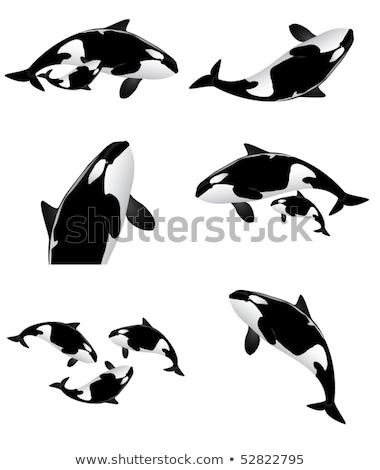 kék · rajz · bálna · izolált · fehér · boldog - stock fotó © marysan