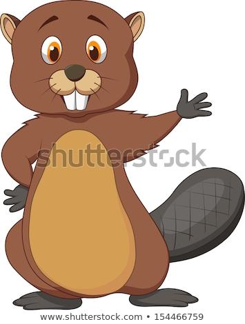 Karikatür kunduz işaret örnek komik yön Stok fotoğraf © bennerdesign