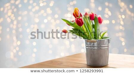 Kırmızı lâle çiçekler kova tablo ışıklar Stok fotoğraf © dolgachov