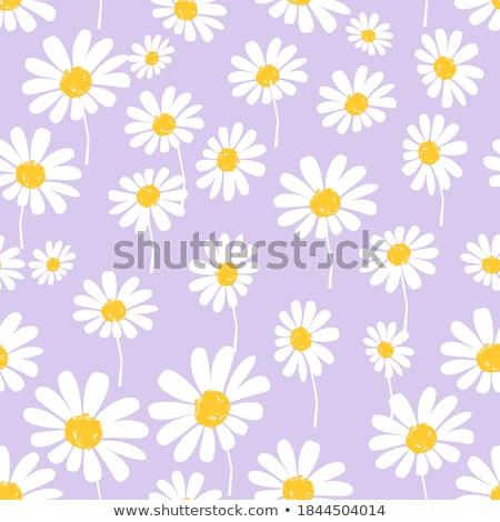 Paars daisy bloem bloemblaadjes bloeien abstract Stockfoto © Anneleven