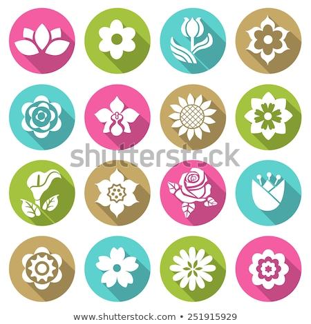 Steeg kleur icon schaduw bloem bruiloft Stockfoto © Imaagio