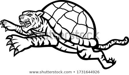 Teknős tigris oldal kabala ikon illusztráció Stock fotó © patrimonio