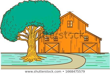 Americano granero roble línea color ilustración Foto stock © patrimonio