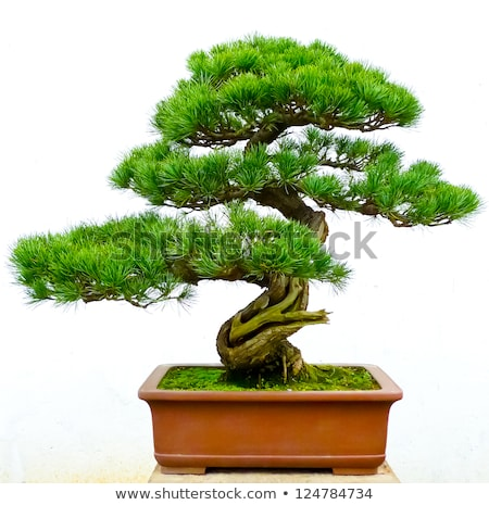 Green plant in Chinese pottery Stock photo © Ansonstock