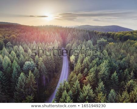 フォレスト 道路 旅行 ツリー 草 ストックフォト © Vividrange