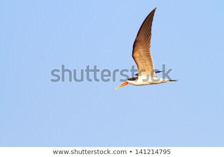 africano · vôo · comida · rio · Botswana · paisagem - foto stock © hedrus