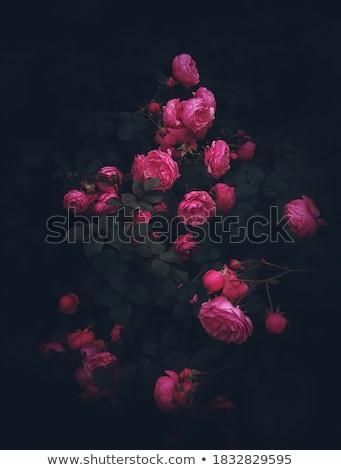 Foto stock: Escuro · romântico · beleza · belo · sereno · vestido · preto