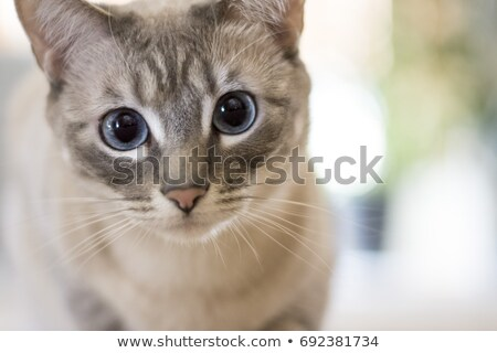 Stock photo: black kitten and green eyes