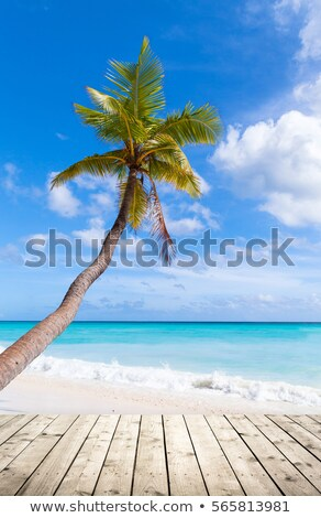 coco · arbre · croissant · vide · plage · tropicale · semences - photo stock © KonArt