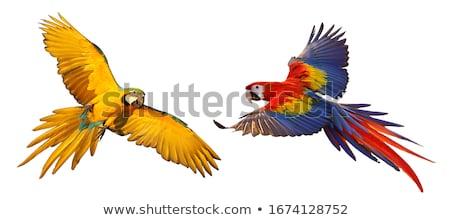 Macaw Bird Stock photo © indiwarm