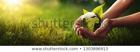 Opslaan aarde vliegen kikker tropische dieren Stockfoto © macropixel