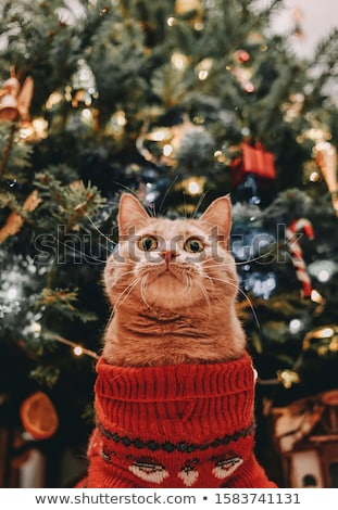 cat waiting miracle stock photo © -talex-