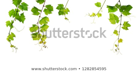 five fresh green branches stock photo © newt96
