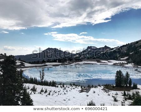parque · invierno · California · EUA - foto stock © snyfer