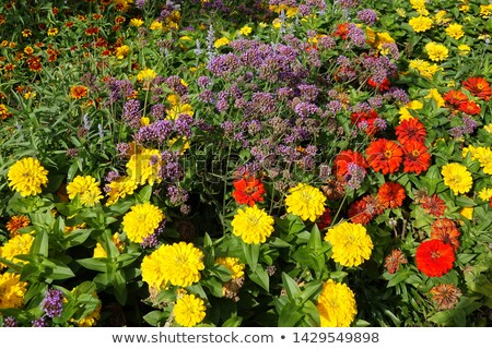 a colorful flowerbed in a park Stock photo © Zerbor