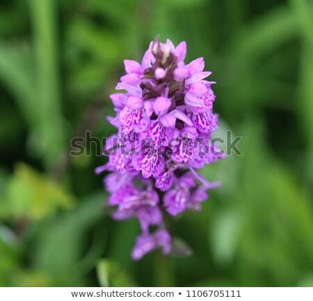 orchidee · twee · bloemen · natuur · zomer · groene - stockfoto © tainasohlman