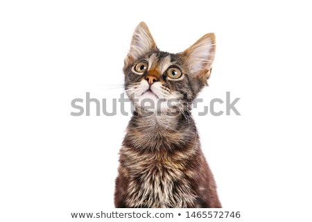 kitty · peu · chat · jouer · tapis - photo stock © MKucova