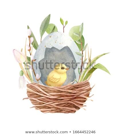 Easter eggs in the nest Stock photo © Kor