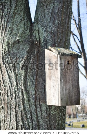 bird sheltering broken tree Stock photo © sirylok