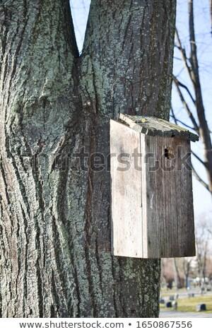 bird sheltering broken tree stock photo © sirylok