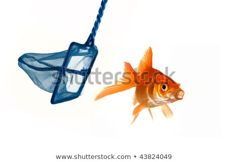 Goldfish net stupide poissons natation Photo stock © c-foto