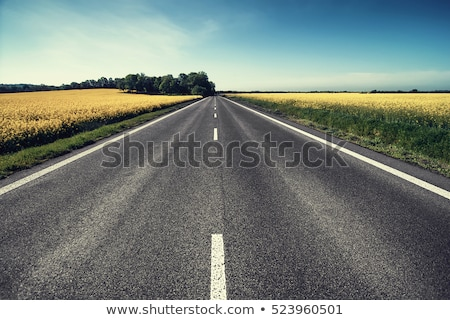 White road in perspective Stock photo © sidmay