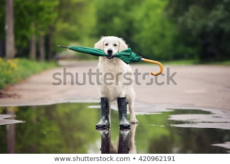 Psa deszcz nie szczęśliwy posiedzenia charakter Zdjęcia stock © DNF-Style