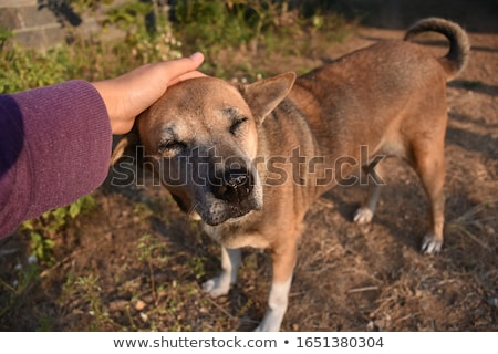 Farm Girl and Dog Relaxing Stock photo © leetorrens