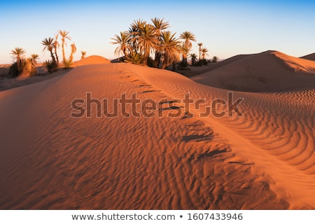 Afrikai oázis gyönyörű természetes tájkép égbolt Stock fotó © andromeda