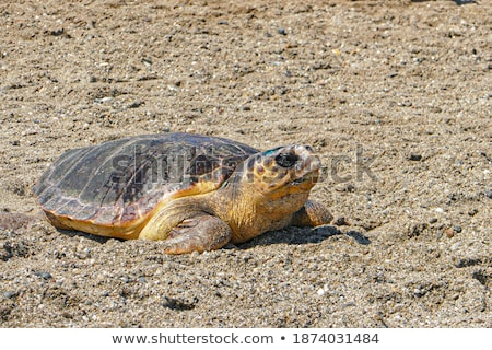 песок скульптуры пляж мнение Сток-фото © sirylok