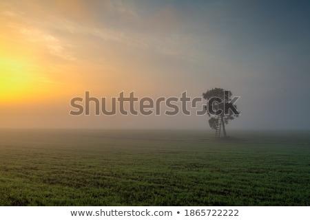 solitário · árvore · manhã · névoa · vazio · campo - foto stock © capturelight