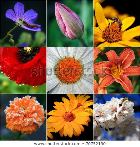 germ of a flower close-up  Stock photo © OleksandrO
