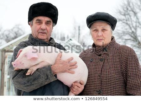 świń ilustracja miłości szczęśliwy wieprzowych funny Zdjęcia stock © adrenalina