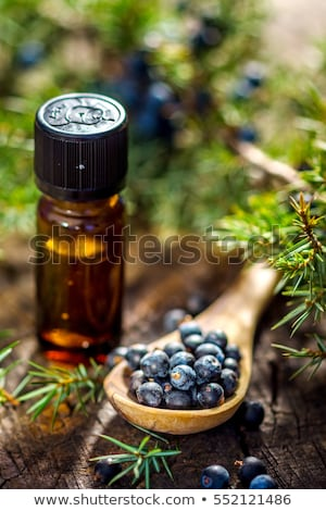 juniper essential oil Stock photo © joannawnuk