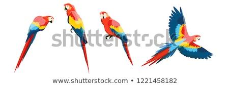 Vector macaw illustration. Yellow parrot sitting on branch. Stock photo © artibelka