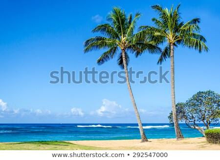 Kókuszpálma Hawaii USA textúra fa tájkép Stock fotó © Mariusz_Prusaczyk