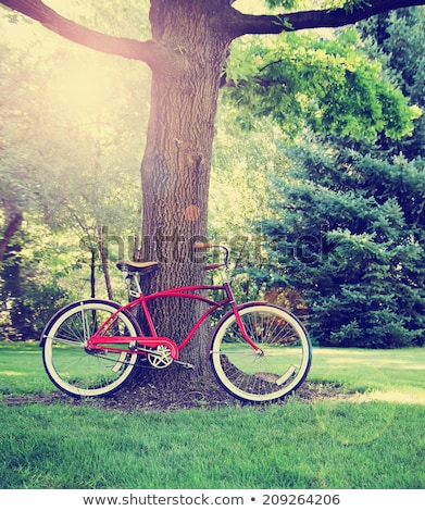 Bike leaned against old tree Stock photo © viperfzk