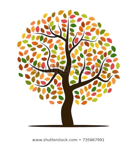 Sonbahar ağaç sincap vektör renkli Stok fotoğraf © beaubelle