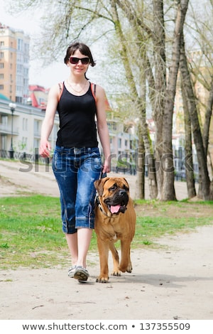 Stock photo: girl walking with the dog breed Bullmastiff