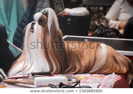 bonitinho · imagem · cachorro · olhos · branco · jovem - foto stock © stevanovicigor
