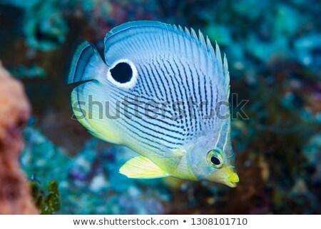 蝶 海 食品 川 動物 ストックフォト © bluering