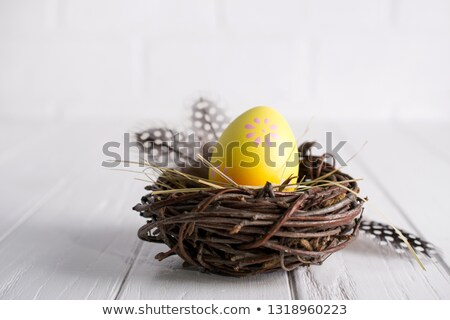 Decorative nest Stock photo © homydesign