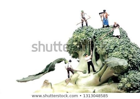 Stock fotó: Miniature Farmers Crew Harvesting Broccoli Crowns