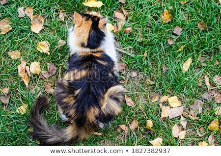 beautiful red kitten on a green background back view stock photo © yatsenko