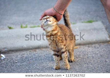 бездомным · кошки · пить · воды · животные · серый - Сток-фото © fogen