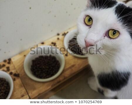 Gatto grigio stupido faccia illustrazione cat arte Foto d'archivio © bluering